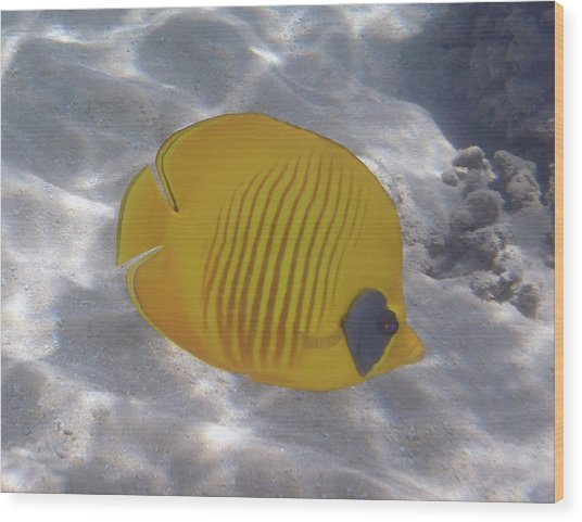 The Bluecheeked Butterflyfish Red Sea Wood Print