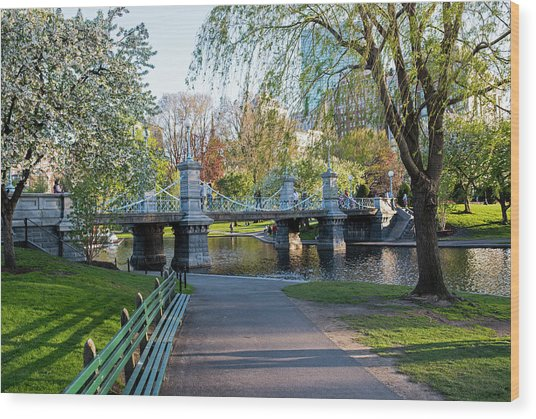 The Boston Public Garden In The Spring Boston Ma Wood Print