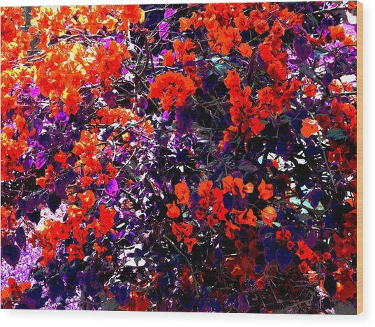 The Bougainvillea Poster Wood Print by Juana Maria Garcia-Domenech