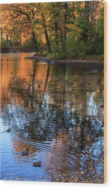 The Bright Colors Of Autumn, Quiet Evenings Are Reflected In The Waters Of The City Pond Wood Print