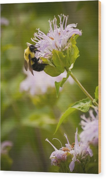 The Bumble Bee Wood Print by Chad Davis