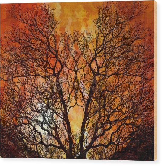 The Burning Bush Wood Print by Lynn Andrews