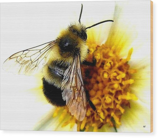 The Buzz Wood Print