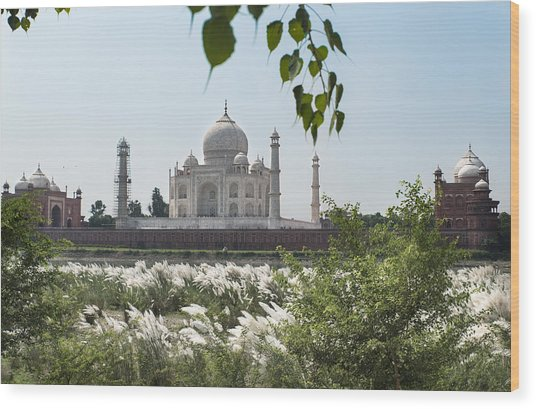 The Calm Behind The Taj Mahal Wood Print