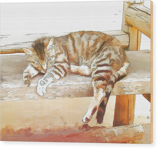 The Cat Is Back Wood Print by Jan Hattingh