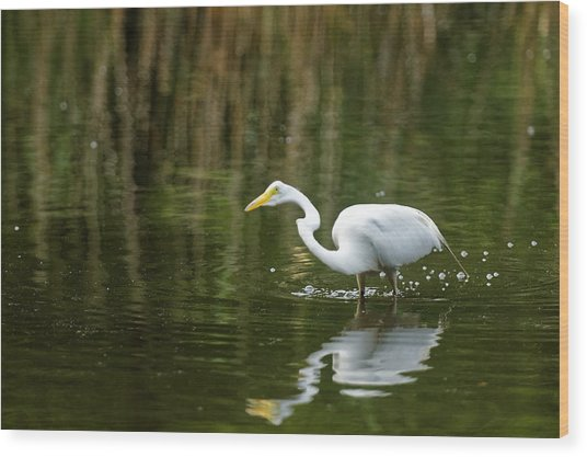 The Central Park Egret Wood Print by M Nuri Shakoor
