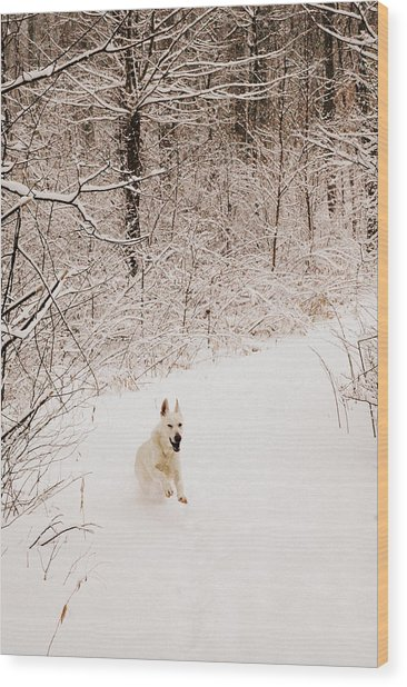 The Chase Wood Print by Cheryl Helms
