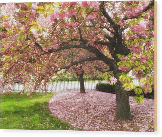 The Cherry Tree Wood Print