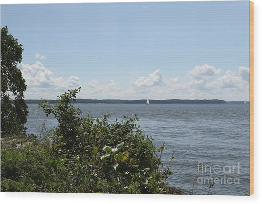 The Chesapeake From Turkey Point Wood Print