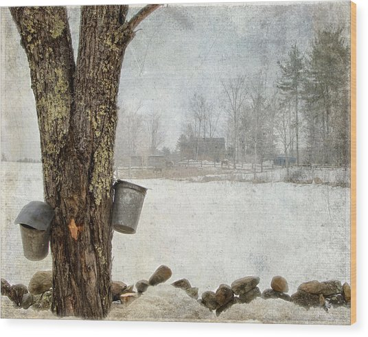 Collecting Sap For Making Maple Syrup Wood Print