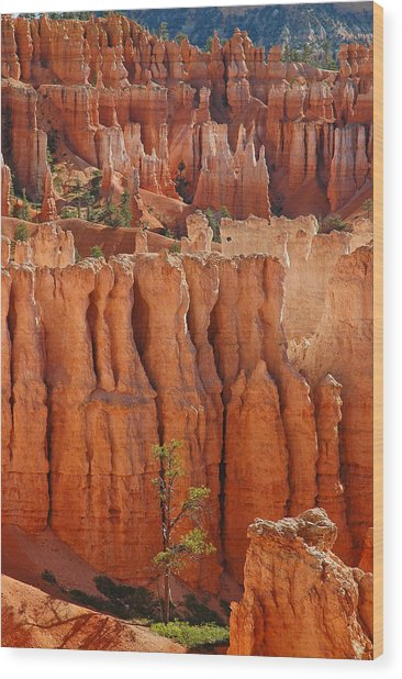 The Colors Of Bryce Canyon Wood Print