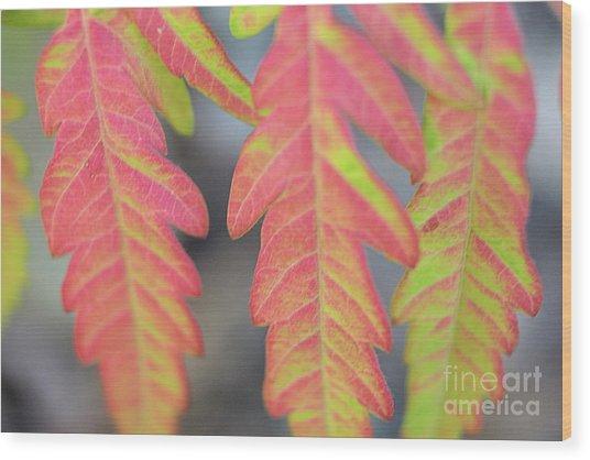 The Colors Of Shumac 8 Wood Print