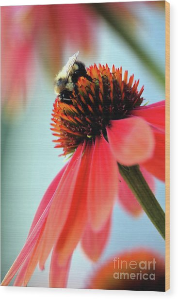 The Coneflower Collection 2 Wood Print