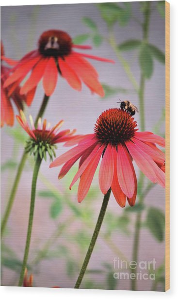 The Coneflower Collection Wood Print