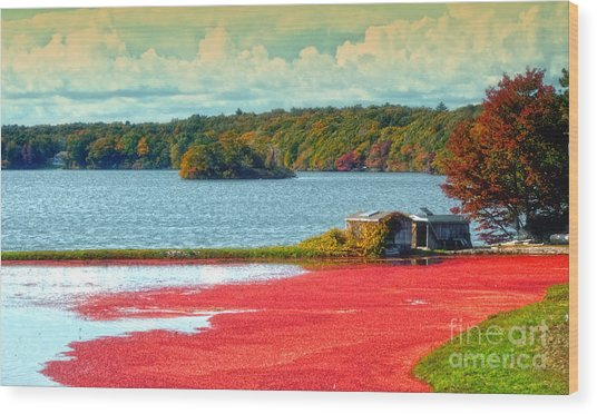 The Cranberry Farm On Cape Cod Wood Print