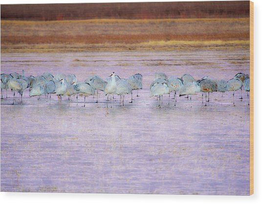 The Cranes Of Bosque Wood Print