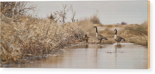 The Crossing Wood Print by Patrick Ziegler