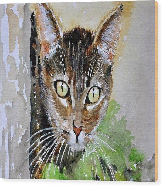 The Curious Tabby Cat Wood Print