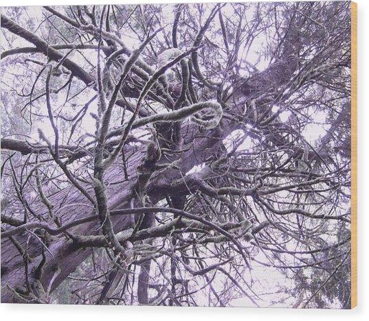 The Deception Tree Wood Print