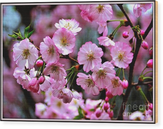Wood Print featuring the photograph The Delicate Cherry Blossoms by Patti Whitten