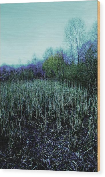 The Diary Wood Print by Dean Edwards
