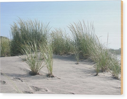 The Dunes Wood Print by Dennis Curry