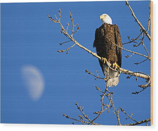 The Eagle Has Landed Wood Print