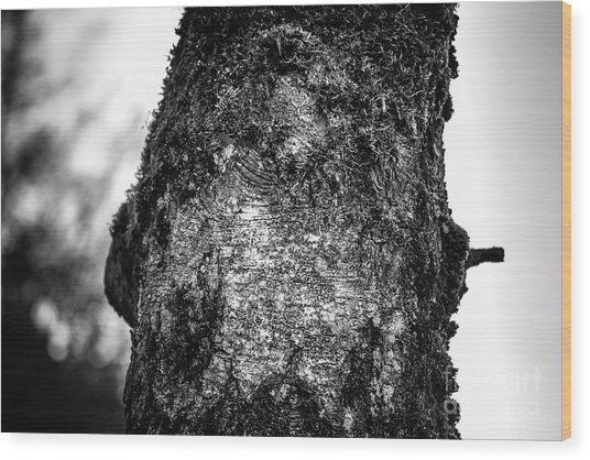 The Eagle In The Tree Wood Print