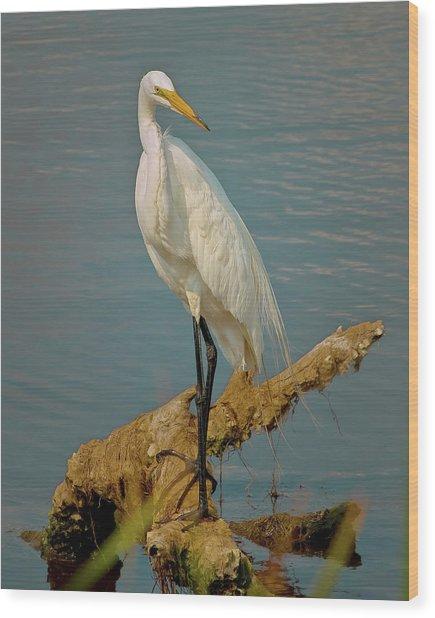 The Elegant Egret Wood Print