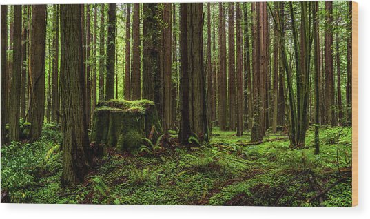 The Emerald Forest Wood Print