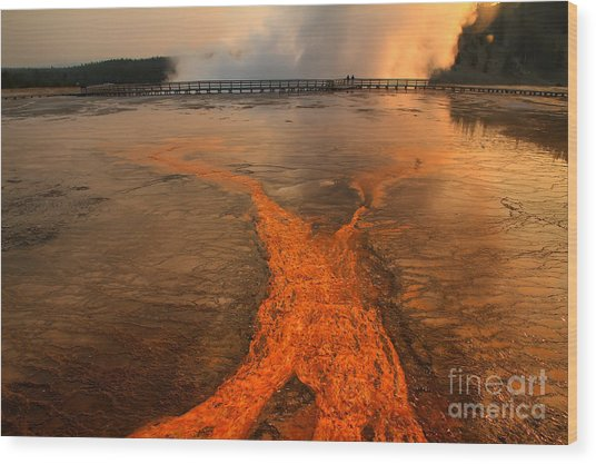 The Enchantment Of Grand Prismatic Spring Wood Print