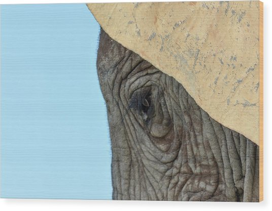 The Eye Of An Elephant Wood Print