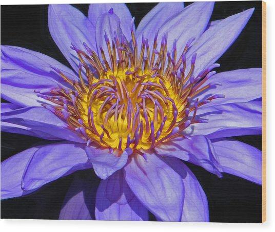 The Eye Of The Water Lily Wood Print