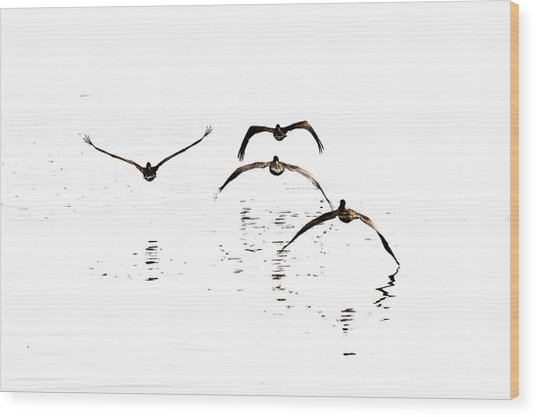 The Flight Of The Pelicans  Wood Print