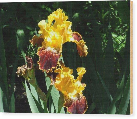 The Flowering Torch Wood Print by Dennis Wilkins