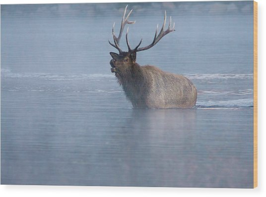 Wood Print featuring the photograph The Foggy Bugle by John De Bord