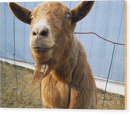 The Friendly Goat  Wood Print