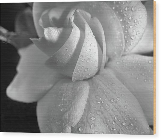 The Gardenia In Black And White Wood Print by JC Findley