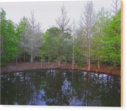 The Gator Hole At Green Cay In Florida Wood Print