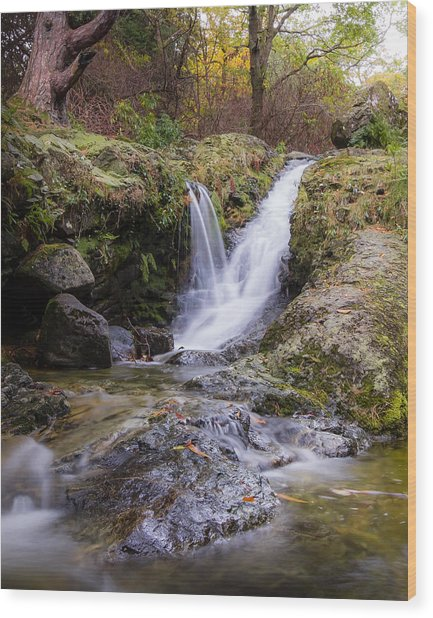 The Glen River Falls Wood Print