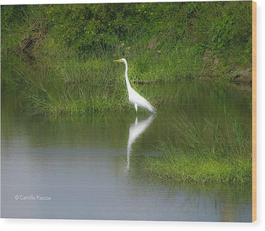 Great Egret By The Waters Edge Wood Print