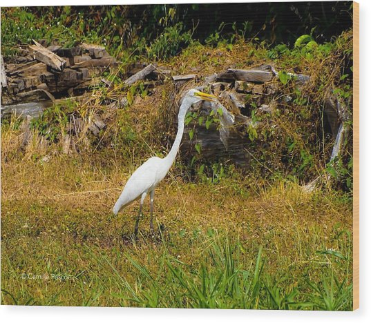 Egret Against Driftwood Wood Print