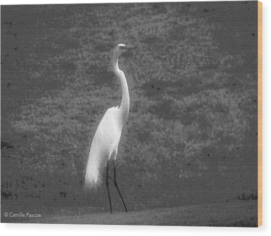The Great Egret Wood Print