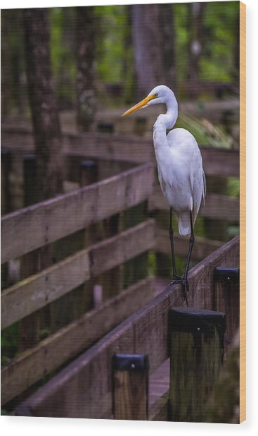 The Great Egret Wood Print