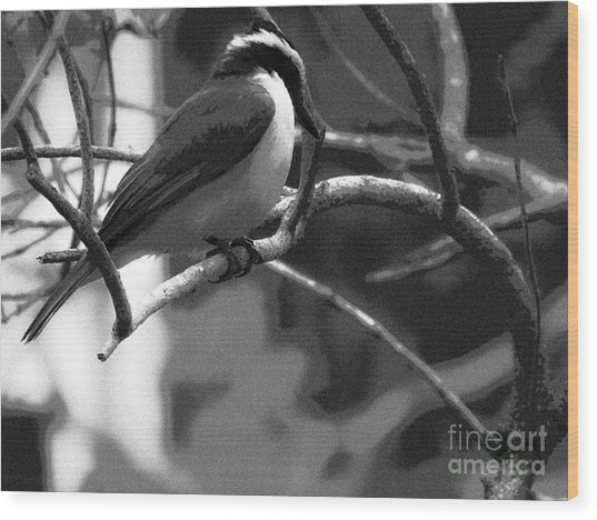The Great Kiskadee  Wood Print