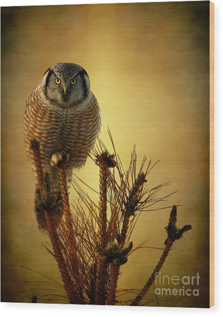 The Great Stare Down Wood Print
