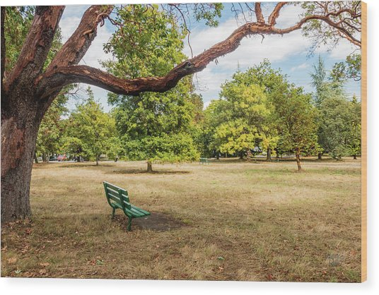 The Green Bench Wood Print