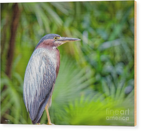 The Green Heron Wood Print