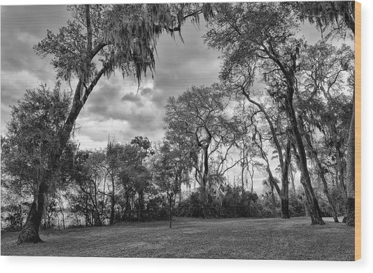 The Grounds Of Fort Caroline National Memorial Wood Print