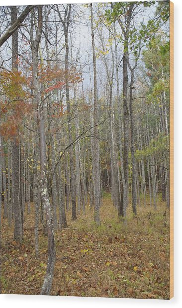 The Grove Wood Print by Bj Hodges